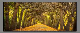 Obrazy stromy 2095