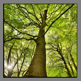 Obrazy stromy 2096