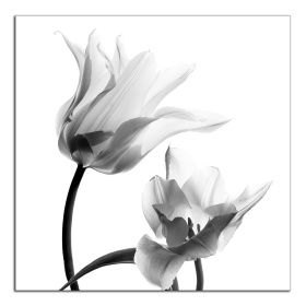 Obrazy tulipány 2111