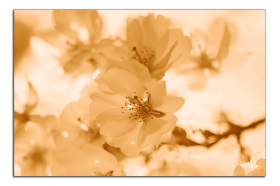 Obrazy květy 2112