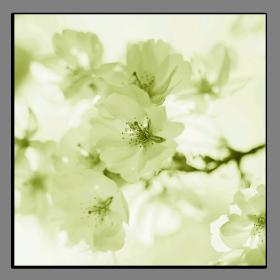 Obrazy květy 2115