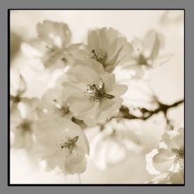 Obrazy květy 2122