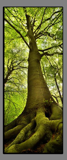 Obrazy stromy 2129
