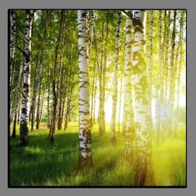 Obrazy stromy 2133
