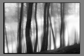 Obrazy čistě černobílý 2153