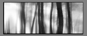 Obrazy čistě černobílý 2157