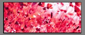 Obrazy harmonie květů 2161
