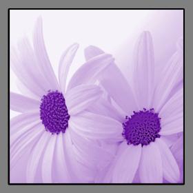 Obrazy květy 2168