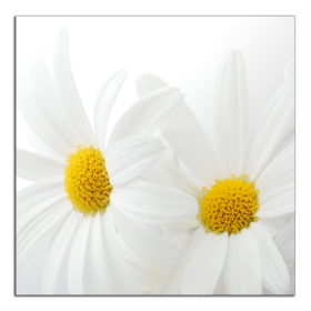 Obrazy květy 2169
