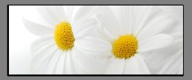 Obrazy květy 2178