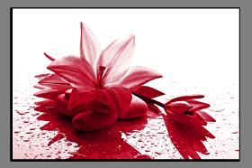Obrazy harmonie květů 2179