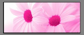 Obrazy květy 2180