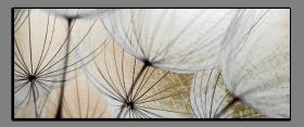 Obrazy pampeliška 2181