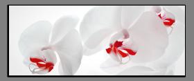 Obrazy orchidey 2186