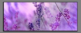 Obrazy harmonie květů 2187