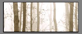 Obrazy stromy 2210