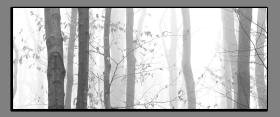 Obrazy čistě černobílý 2211