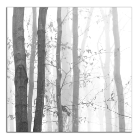 Obrazy čistě černobílý 2215