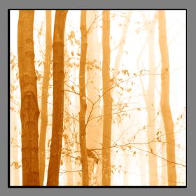 Obrazy stromy 2219