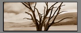 Obrazy stromy 2252