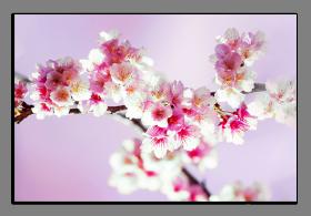 Obrazy harmonie květů 2254