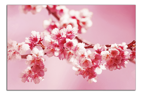 Obrazy harmonie květů 2255