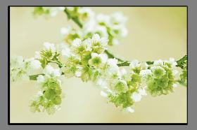 Obrazy harmonie květů 2256