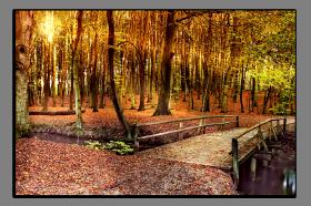 Obrazy stromy 2257