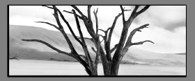 Obrazy čistě černobílý 2258