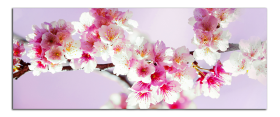 Obrazy harmonie květů 2263