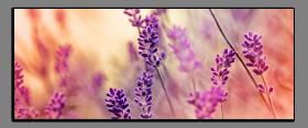 Obrazy harmonie květů 2272