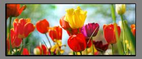 Obrazy tulipány 2283