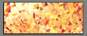 Obrazy harmonie květů 2285
