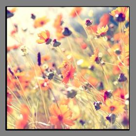 Obrazy harmonie květů 2286