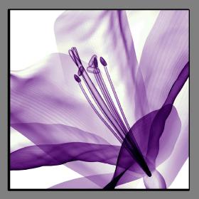 Obrazy tulipány 2501