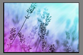 Obrazy harmonie květů 2503