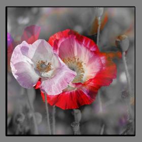 Obrazy s barevným detailem 2506