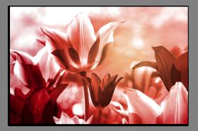 Obrazy tulipány 2512