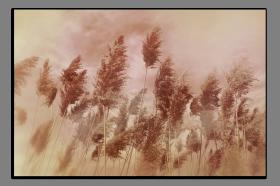 Obrazy detaily přírody 2513