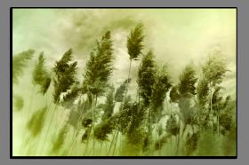 Obrazy detaily přírody 2514