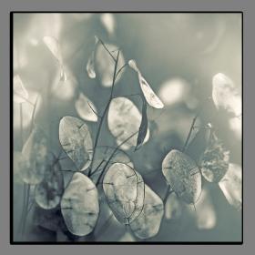Obrazy čistě černobílý 2519