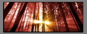 Obrazy stromy 2520