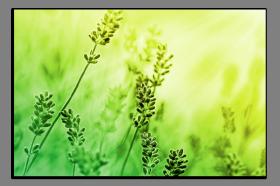 Obrazy harmonie květů 2530
