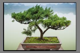 Obrazy stromy 2536