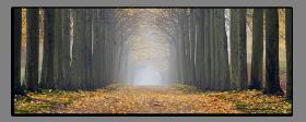 Obrazy stromy 2537