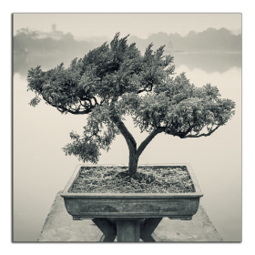 Obrazy čistě černobílý 2538