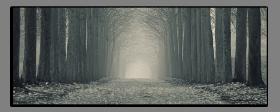 Obrazy čistě černobílý 2539