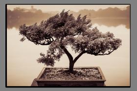 Obrazy stromy 2543