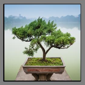Obrazy stromy 2544