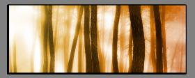 Obrazy stromy 2546